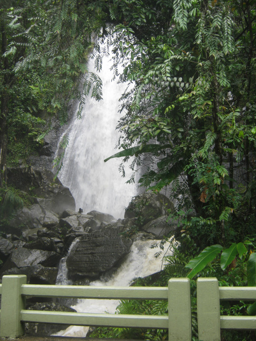 A waterfall in El Yunque Rainforest