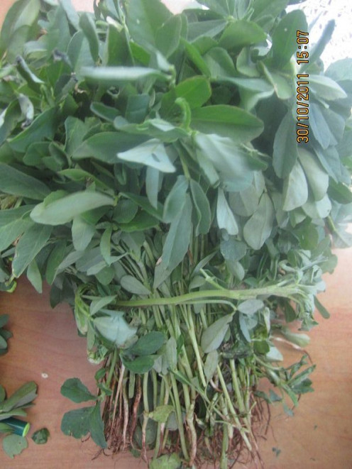 Methi is good for treating various health conditions and is also good for the hair and skin