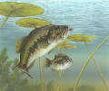 Top 10 bass fishing tips for spring bass