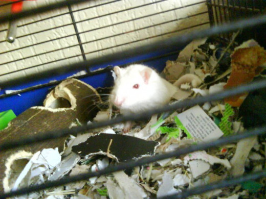 Flake: Found in a shoe and returned to the safety of his cage.
