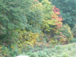 The view of autumn foliage from our back deck. I love to sit on my deck and paint the beauty.