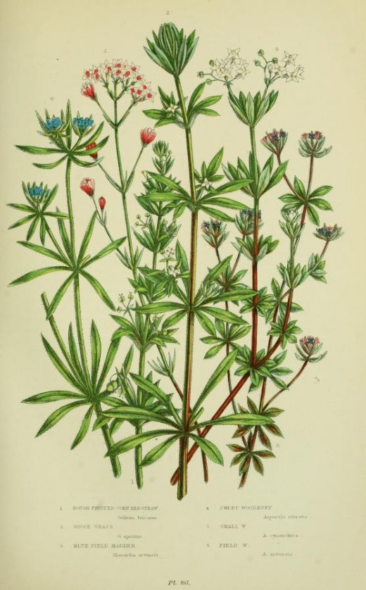 The flowering Plants, grasses, sedges and ferns of Great Britain Anne Prattand Edward Step courtesy of the BHL