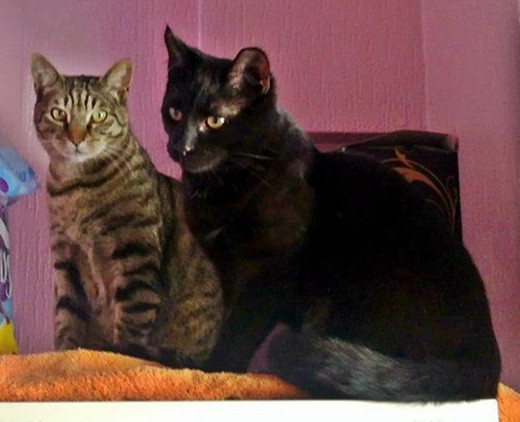 All grown up: Pepper and Harley, no longer a kitten. The two of them have remained friends.