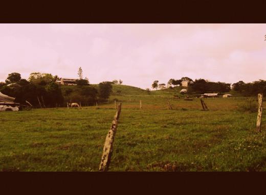 Amish farms at Lower Barton Creek. No photos allowed. :(