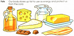 General and Chemical Definition of Fats