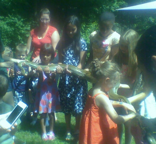 "Children holding a snake at an ""Animal Adventures"" summer library program"