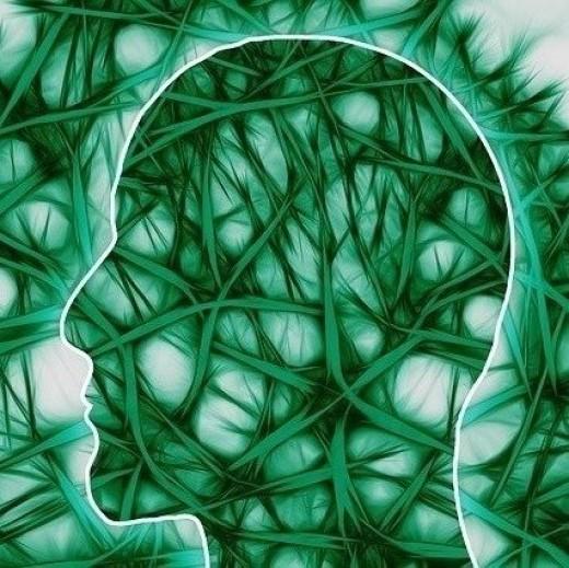 Neural Pathways in Parkinson's Disease