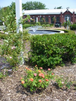 Photo with a fountain in a rose garden, in this case it is the Gladney Rose Garden.