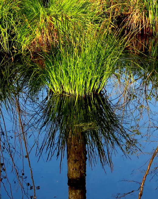 Untrue-reflection from Doug Crittendon flickr.com