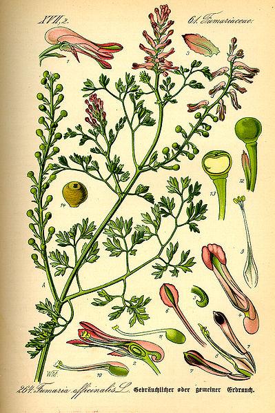Dr Otto Thome's Flora  { Public Domain}