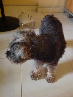 Managing arthritis in older dogs