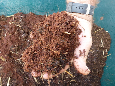 coir or peat moss alone is a sufficient medium to start seedlings.