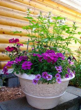Potting soil serves to anchor plants. The content of potting soil can be adjusted for top heavy plants and high wind conditions.