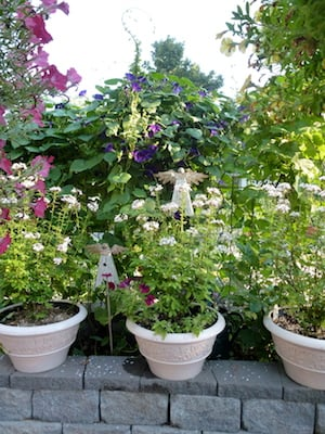 Using soilless soil will reduce disease and weeds in container plantings.