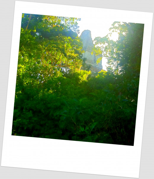 Tikal temple peaking through the canopy