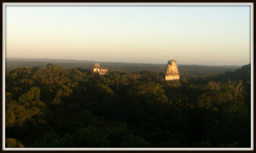 Temples rise above the canopy. (shot taken atop another temple)