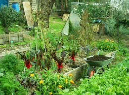 Companion Planting in the Garden (Good and Bad Neighbours)