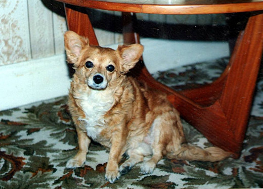 My poor little dog required surgery at 16 years of age.
