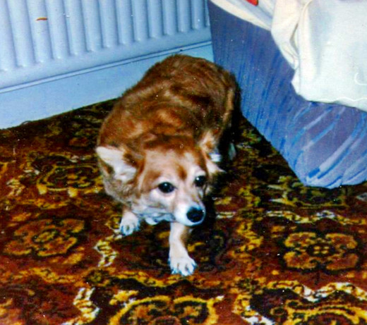 In loving memory of Susie, who finally went to Rainbow Bridge at the age of almost 18 years.