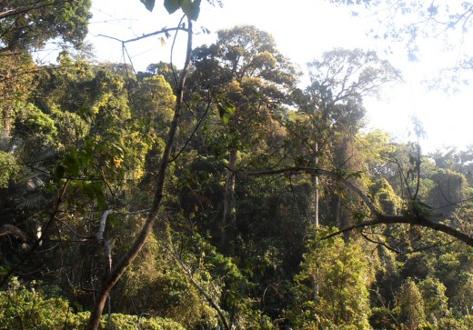 Rainforest in the Malay Peninsula