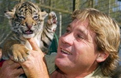 "Does Bindi Irwin Support ""Animal Abuse""? Ridiculous Steve Irwin and SeaWorld Criticism Surges"