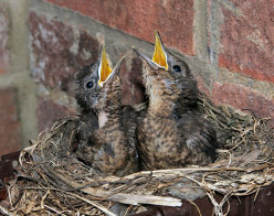 Singing for their Supper