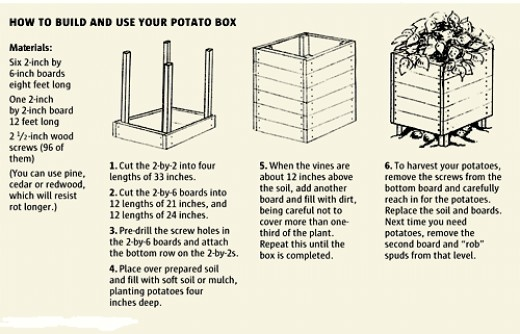 You can easily grow potatoes like in the potato grow box in the photo. Just follow the instructions and build your own potato grow box.