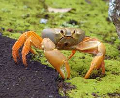 What is artificial crab meat made out of, if it is not actually real crab?