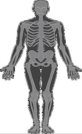 Skeletol System
