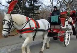 Mayor de Blasio is looking to do away with the iconic horse drawn carriages. Why?
