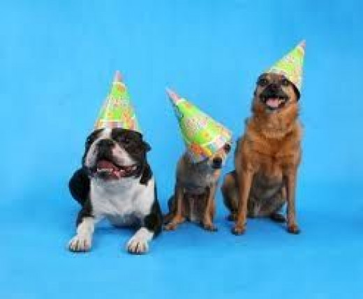 Perfect Dog Birthday Party Gift