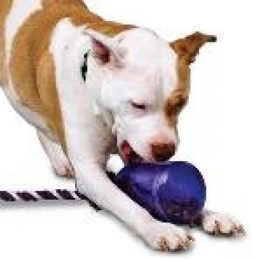Interactive Dog Toys are FUN!