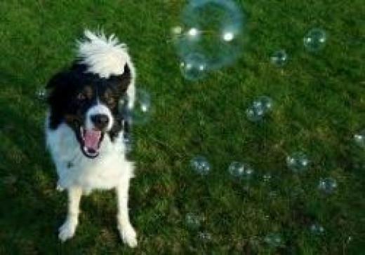 Bacon Bubbles!