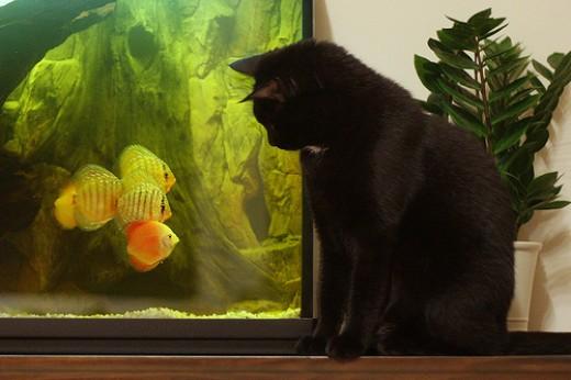 Stress on Fish