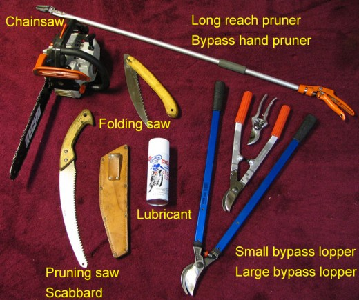 Image by M. D. Vaden of Oregon. Some pruning tools belonging to Oregon Certified Landscape Technician & Arborist, Mario Vaden, a specialist in pruning and arborsculpture. Curved pruning saw and scabbard for storage. Folding saw. Bypass loppers for bi