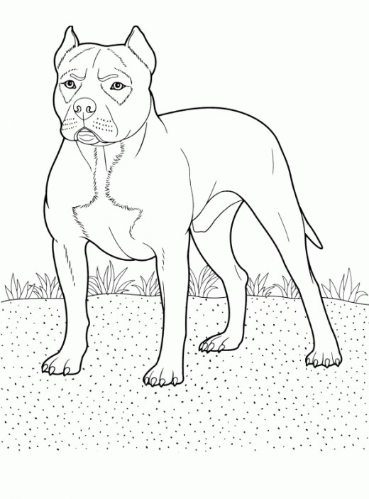 Coloring pages of pit bull dog imagui for Dog breeds coloring pages