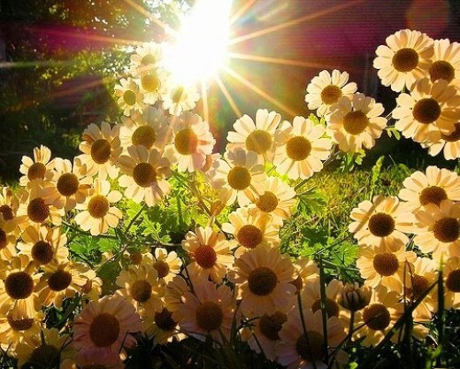 """No matter what is happening now, events will ultimately bend toward love the way flower bends toward sunlight.""- Marianne Williamson"