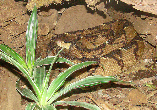 Snake venom has medicinal uses.