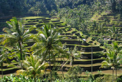 Denpasar Airport to Ubud | Bali Places to Visit