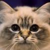 luvtoowrite profile image
