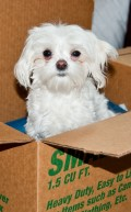 How to Housetrain a Puppy in 5 Days Using a Cardboard Box