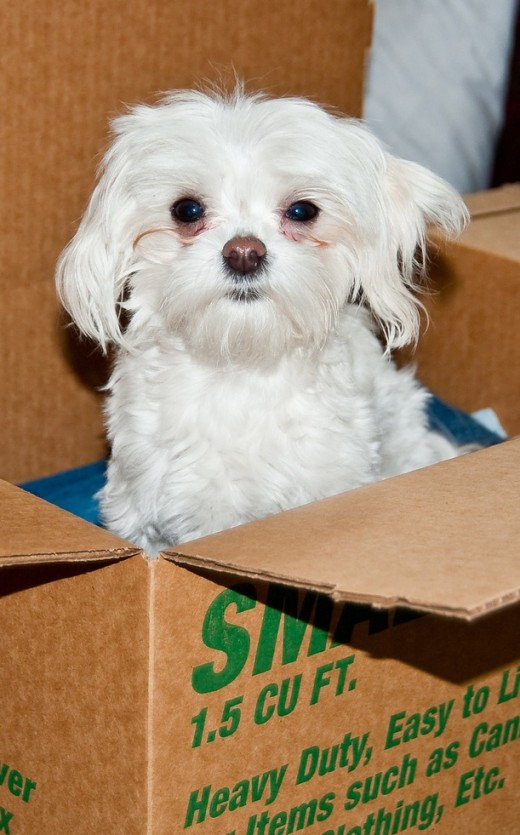 The cardboard box for potty training should be tall enough so that the puppy does not climb out.