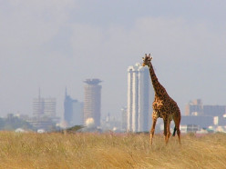 Top Five Guest Houses in Nairobi