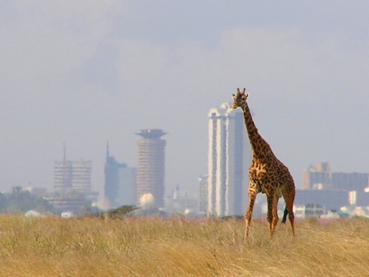 Most guest houses in Nairobi are a short distance from the park