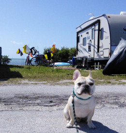 Many RVers, especially those who stay for several weeks or months, personalize their camp sites with decorations. Teddy was particularly taken with this school of fish windsocks.