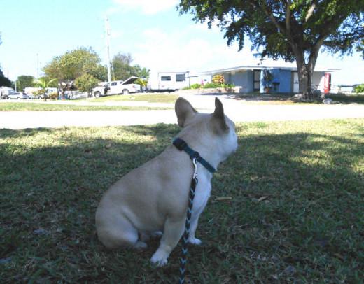 Flat-faced, nosy dogs will appreciate a shady spot.