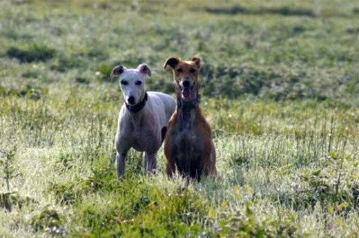 My intention was to write a newspaper article on former racing greyhounds that needed new homes.