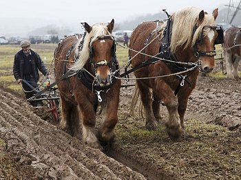 My dad was also a great hand at farming land with one or two mules