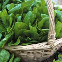 Harvest Spinach All Year Round