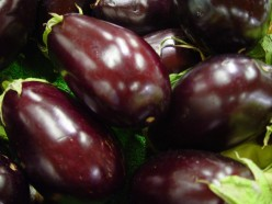 Plant Eggplants for a Bountiful Harvest